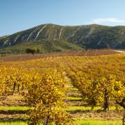 Arrábida Natural Park Vineyards