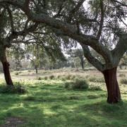 Évora - Alentejo Countryside