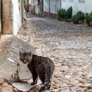 Tomar - Streets (8)