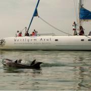 Dolphin Watch Catamaran Cruise