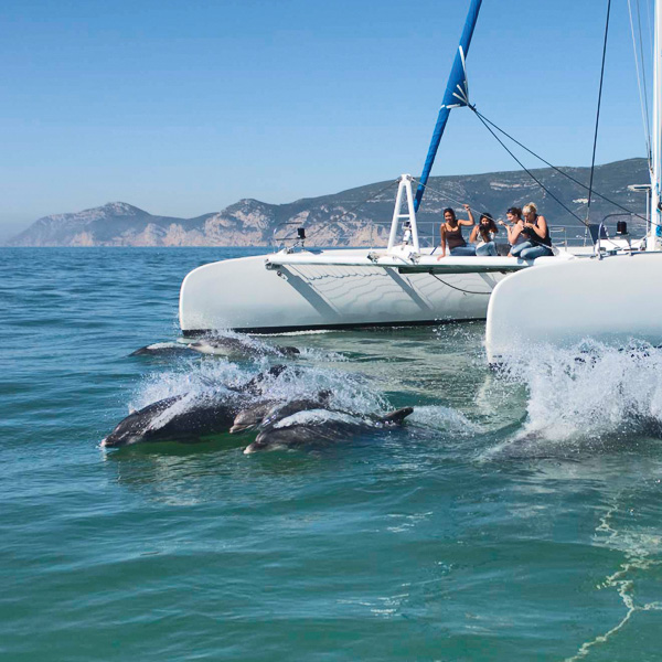 Dolphin Watch Catamaran Cruise